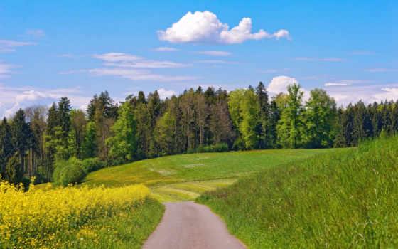 дорога, деревья, цветы, луг, облака, лето, часть, большой, июль, набор, природа, июнь, май, завантажити, лес,
