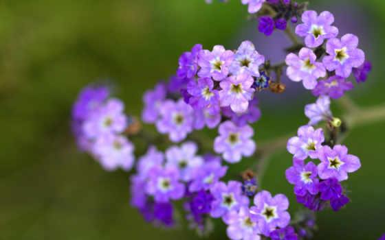 цветы, макро