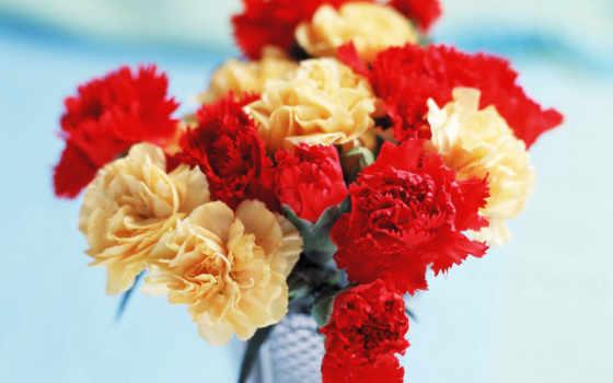 гвоздики, цветы, carnation