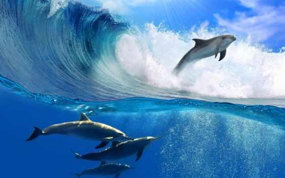 красивые, прыжок, ocean, дельфины, хорошем,