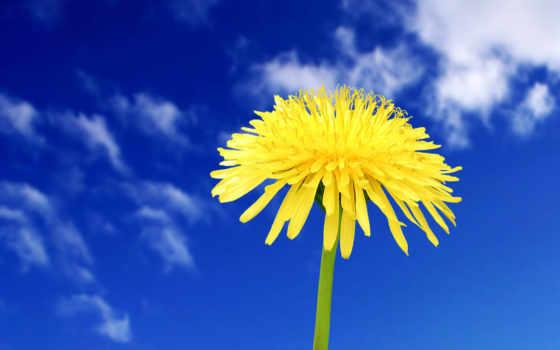 широкоформатные, цветы, красивые