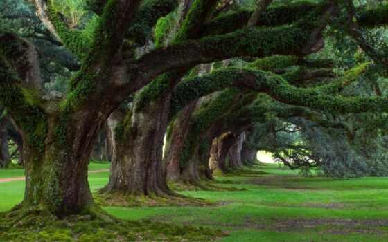 природа, trees, summer