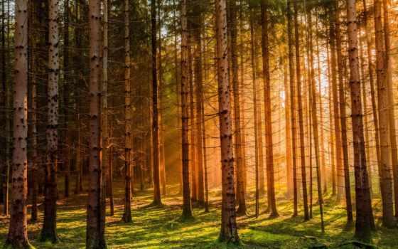 las, słońca, przebijające, zachód, światło, tapety, mirko, fikentscher, pulpit,