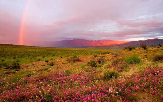 боррего, анза, пустыня, сша, state, цветущая, park, california,