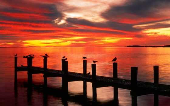 закат, чайка, florida, рассвет, природа, причал, планшетный