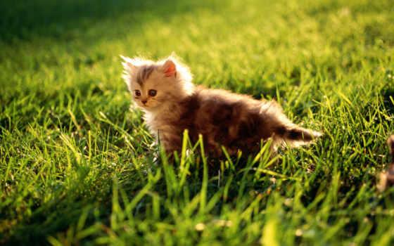 котенок, grass