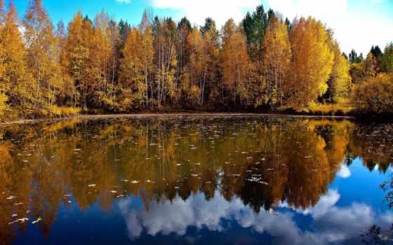 priroda, озеро, trees, природа, деревя, osen, листья, дерево, небо, туман,