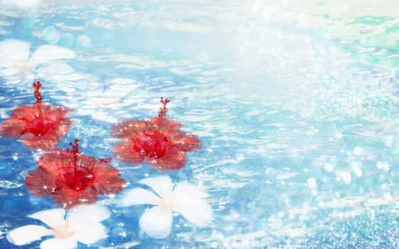 cvety, широкоформатные, заставки