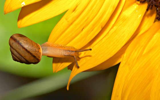 подсолнух, snail, high