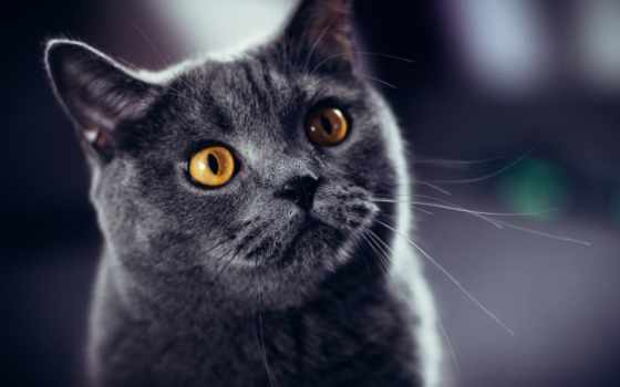 кот, flickr, pinterest