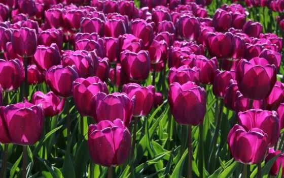 flowers, цветы, красные