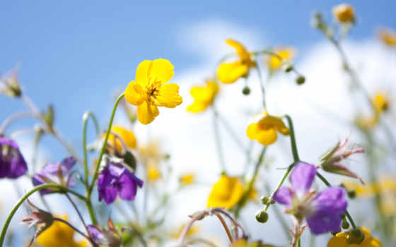 настроение, хороший, cvety, за, природа, весна, небо, об, статусы,