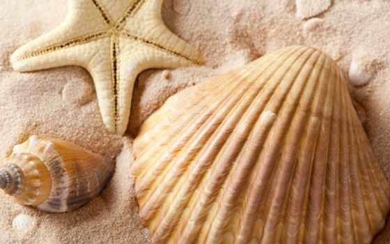 ракушки, star, морская