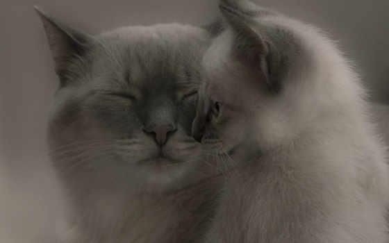 кот, котенок