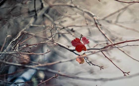 природа, яndex, макро, коллекциях, минимализм,