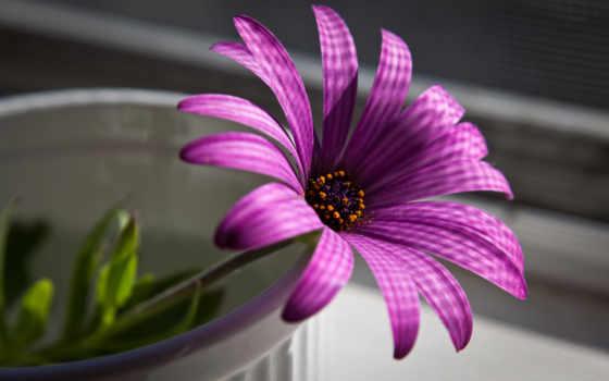 цветы, нежный, сиреневый