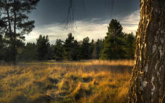 береза, ствол, трава