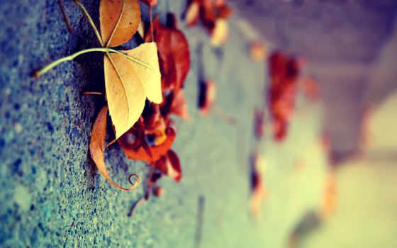 осень, листва, желтые, макро, iphone, природа, вертикально, сухие,