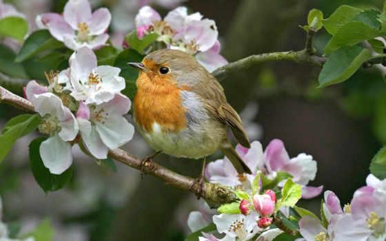 птицы, весна, весной
