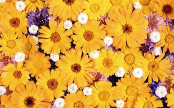 коллекция, purple, цветы, cvety, yellow, daisy, art