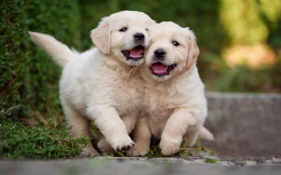 собака, devochka, klichka, порода, щенок, имя, small, собака, красивый, moch, назвать
