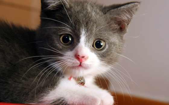кошки, коты, животные