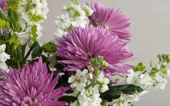 цветы, хризантемы, букеты