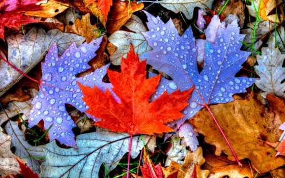 листья, you, фотопанно