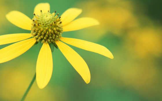 cvety, фотография, милых