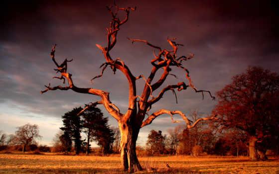 дерево, сухое, небо