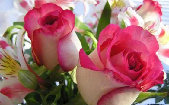 розы, цветы, красивые, самые, youtube, свете, роза, тебя, продолжительность, очень,