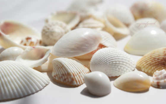 ракушки, морские, белые, seashells, натуральные, банка, берегу,