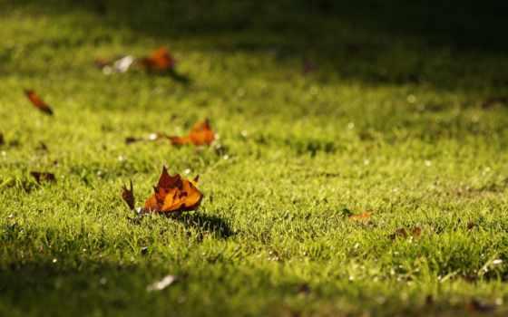 трава, листва, природа, лес, park, макро,