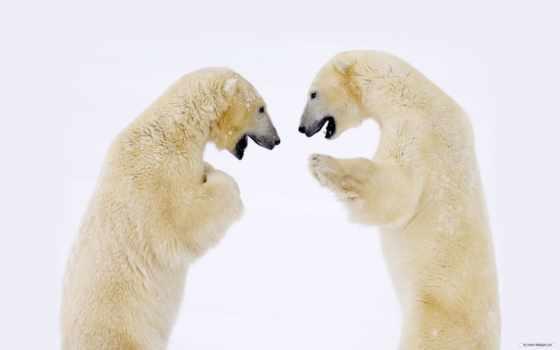 zhivotnye, медведь, хорошего, many, настроения, арктики, лед, зверь, животных, bigmir,