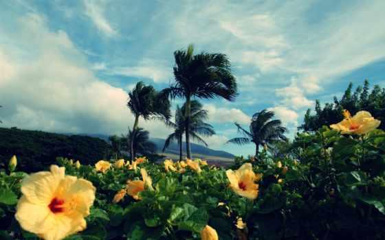 природа, красивая, тропиках, among, palm, категория, микс, landscape, природы,