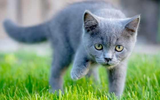 кот, картинка, смотреть, котенок, их, серый, трава, сервал,