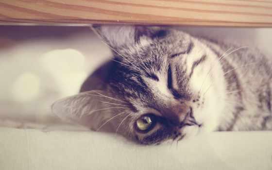 wallpaper, кот
