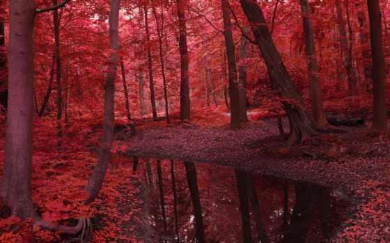 trees, природа, осень, листва, water, река, красное, лес, landscape, красавица, картинка,