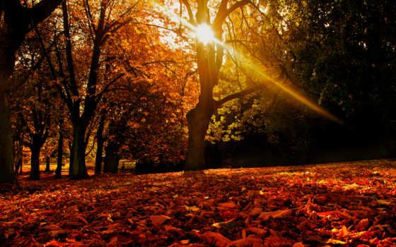 pulpit, tapety, jesień, pin, pictures, liście, światło, przebijające,