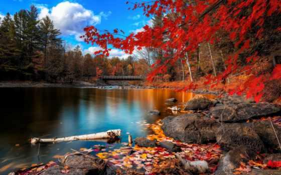 осень, листва, осенние, осени, мост, trees, разделе, желтые, камни, качества, лес,