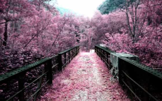 Сакура, cvety, лепестки, japanese, мост, garden, цветущая, японцы,