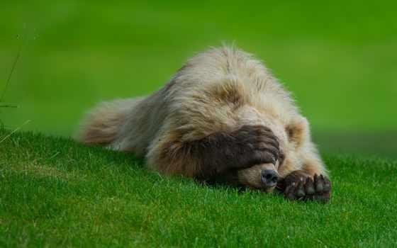 медведь, яndex, маша, sleeping, hide, anetta, коллекциях, мимишки,