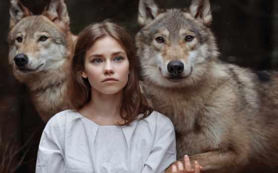 волки, блог, desktop, девушка, волков, among, красивые,