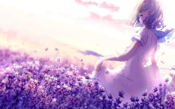 anime, lavender, purple, девушка, flowers, desktop, lavenders,
