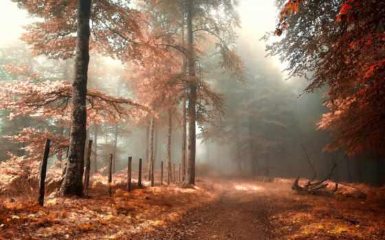 дорога, туман, забор, лес, коллекция, осень, природа, одеяло