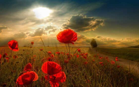 цветы, солнце