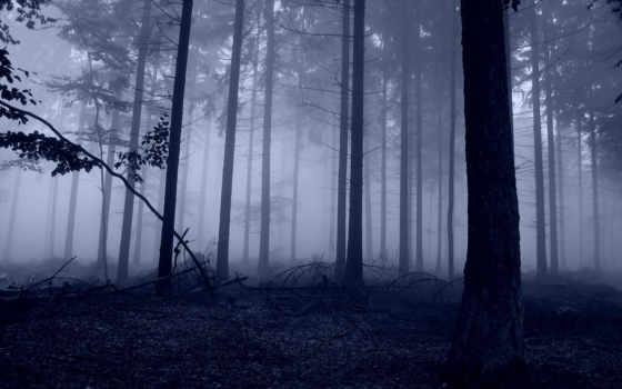 лес, туман, широкоформатные, slender, png, природа,