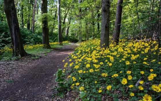 лес, flowers, природа, цветы, trees, desktop, тропинка, зелёный,