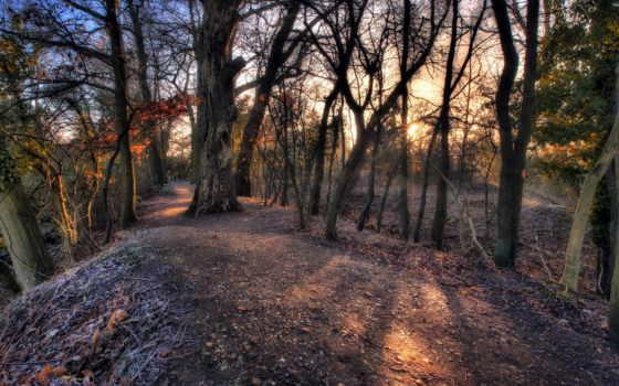 лес, руническая, осень, медитация, trees, интернете, money, качества, pictures,