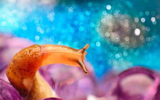 макро, snail, природа, bokeh, horns, dangerous, best, mobile, animals,